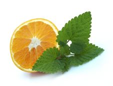 Free Citrus And Mint Stock Photography - 16255722