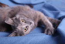 A Kitten On A Blue Blanket Stock Images