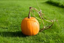 Free Vibrant Pumpkin Stock Images - 16256414