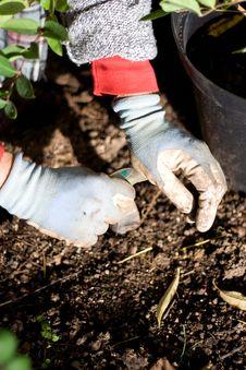 Free Planting Flower Bulbs Royalty Free Stock Photos - 16256438