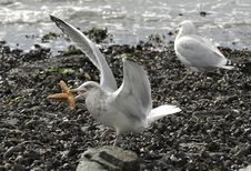 Free Birds On The Shore Stock Photography - 16256752