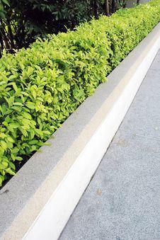 Free Wall Tree Royalty Free Stock Photo - 16257185