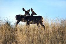 Free Deer Observation Royalty Free Stock Image - 16257686