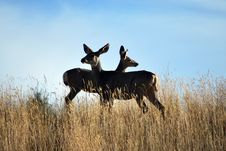 Free Deer Observation Royalty Free Stock Photos - 16257688