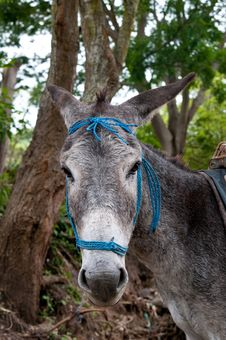 Free Donkey Face Stock Images - 16258954