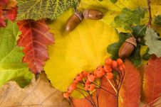 Free Fallen Autumn Leaves Stock Photo - 16259560