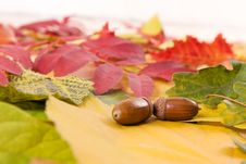 Free Fallen Autumn Leaves Royalty Free Stock Images - 16259569