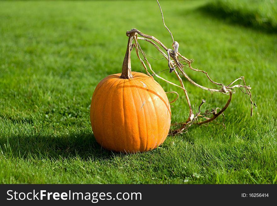 Vibrant Pumpkin