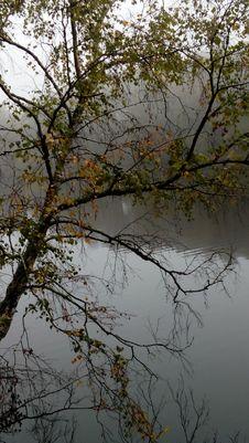 Free Tree, Lake, Pond Magic Of Nature, Lake, Beauty Of Life. Royalty Free Stock Photo - 162500435