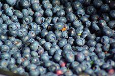 Free Blueberries, Farmers Market, Town Square, Jackson, Wyoming Stock Photos - 162501813