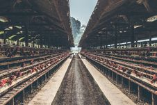 Free Chickens In The Cage On Chicken Farm. Chicken Eggs Farm. Stock Photo - 162502160