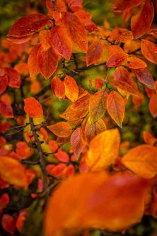 Free Red And Orange Autumn Leaves Background. Stock Photos - 162502183