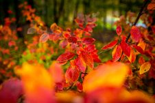 Free Red And Orange Autumn Leaves Background. Royalty Free Stock Photography - 162502257