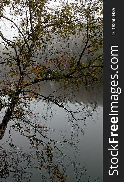 Tree, lake, pond magic of nature, lake, beauty of life.