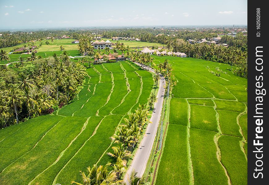 Drone view of rice plantation on bali island with path to walk around and palms.