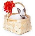 Free White Rabbit In Basket Royalty Free Stock Images - 16261309