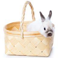 Free White Rabbit In Basket Royalty Free Stock Photos - 16261308