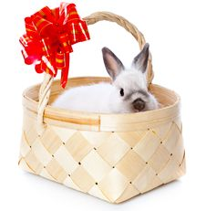 White Rabbit In Basket Royalty Free Stock Images