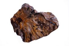 Free Petrified Wood Stock Photo - 16262690