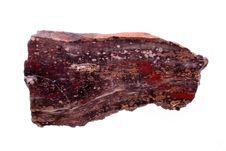 Free Petrified Wood Royalty Free Stock Photos - 16262758