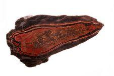 Free Petrified Wood Stock Photos - 16262773