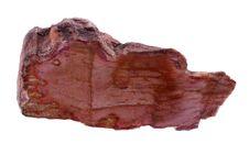 Free Petrified Wood Stock Image - 16262811