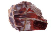 Free Petrified Wood Royalty Free Stock Photo - 16262975