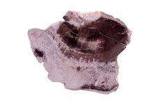 Free Petrified Wood Stock Photo - 16263010
