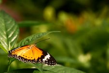 Butterfly Resting On A Leaf Stock Image