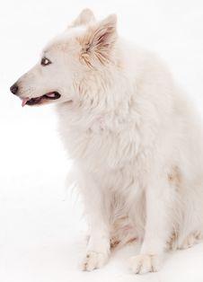 Free Beautiful Dog Sitting On The Floor Stock Image - 16264221