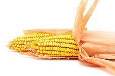 Free Fresh Corn Stock Image - 16265221