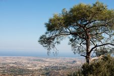 Free Lone Cedar On A Mountain Top Stock Image - 16265971