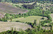 Free Vineyard Stock Photo - 16266630