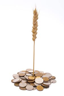 Free Wheat Growing From Pile Of Coins Stock Photo - 16266760