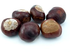 Free Fruits Of A Tree Of A Chestnut Stock Photo - 16269580