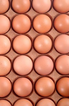 Tray Of Eggs Stock Images