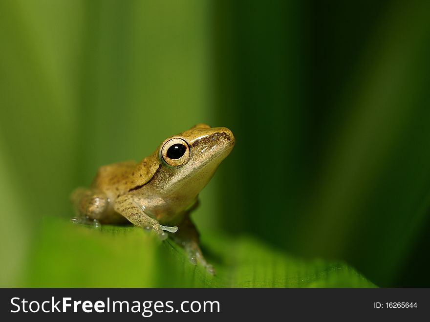 Ambitious frog gazing at the sky