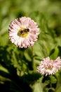 Free Delicate Flowers Stock Photos - 16275303