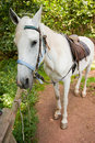 Free White Horse Royalty Free Stock Image - 16279036