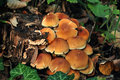 Free Mushrooms Near A Trunk Royalty Free Stock Image - 16279696