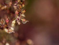Free Autumn Dew Stock Photos - 16271713