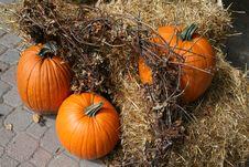 Free Pumpkins Stock Photo - 16273300