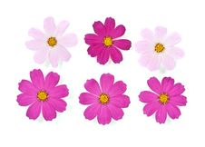 Free Daisies Royalty Free Stock Images - 16274199