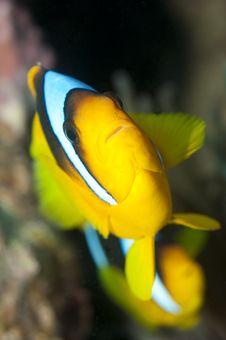 Free Nemo Fish Stock Images - 16274834
