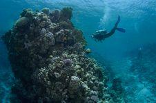 Free Scuba Diver Stock Photo - 16274850