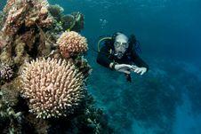 Free Scuba Diver Royalty Free Stock Photo - 16274855