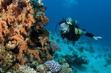 Free Male Scuba Diver Stock Photos - 16274893