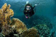 Free Scuba Diver Stock Photos - 16274913