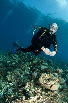 Free Scuba Diver Stock Photos - 16274933