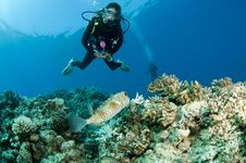 Free Scuba Diver And Puffer Fish Stock Image - 16274941